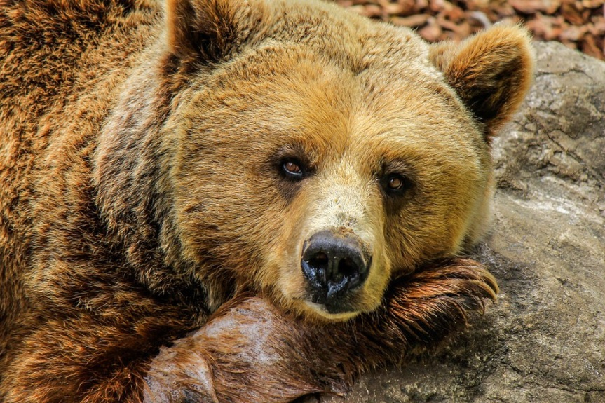 15 Word Story –Bear